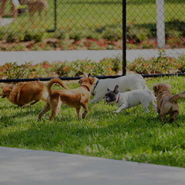 Large Dog Park at Bella Grace Apartments
